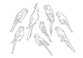 Desenho de mão livre para papagaios Vector