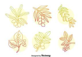 Conjunto de vetores de plantas ervais desenhados a mão