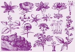 Ilustrações de flores exóticas roxas