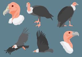 Vetor de ícone de condor grátis