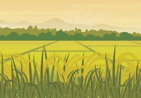 Ilustração gratuita do campo de arroz