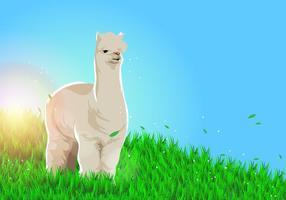 Lama alpaca vector background