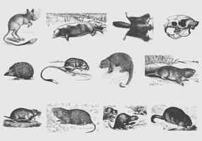 Ilustrações de roedor cinza vetor