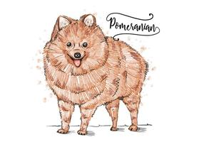 Fundo Pomeranian grátis vetor