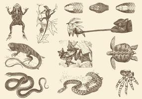 Ilustrações de répteis sepia vetor