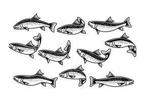 Free Rainbow Trout Vector