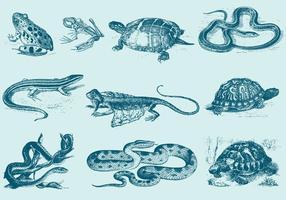 Ilustrações de réptil azul vetor