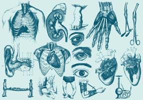 Anatomia azul e ilustrações de cuidados de saúde