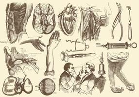 Sepia Anatomia e ilustrações de cuidados de saúde vetor