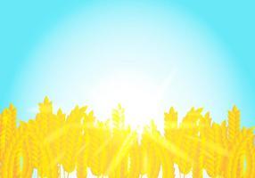 Fundo em flores de colheita de arroz à luz do sol vetor