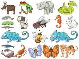 grande conjunto de vida selvagem com muitos tipos de animais vetor
