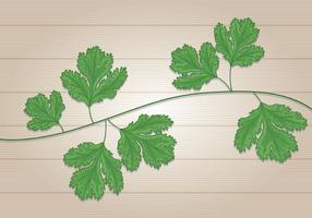 Folhas de Cilantro vetor