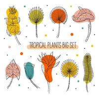 conjunto de folhas e flores tropicais vetor