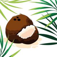 design de coco fresco vetor
