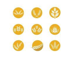 conjunto de logotipo do trigo vetor