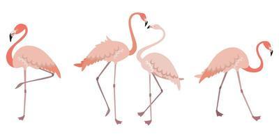 conjunto de flamingos em diferentes poses vetor