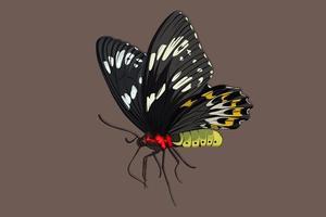 borboleta preta desenho realista de mão vetor
