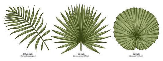 conjunto de folhas de palmeira vintage vetor