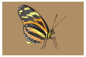 borboleta preta, laranja e amarela vetor