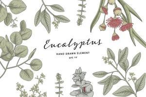 Conjunto botânico desenhado à mão de ramo de eucalipto