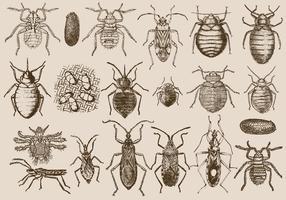Bedbug E Parasite vetor
