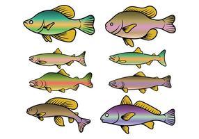 Vetor de peixes da truta arco-íris