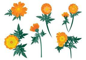 Vetor de flores de calendula grátis