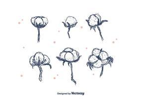 Flor de algodão desenhada à mão vetor