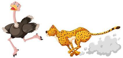 leopardo de desenho animado perseguindo um avestruz vetor