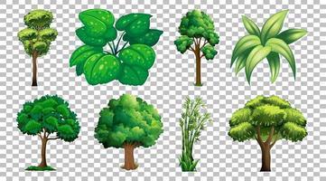 conjunto de árvores e plantas vetor