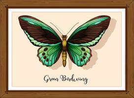 borboleta em moldura de madeira vetor
