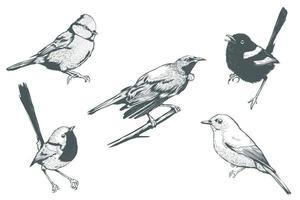conjunto de pássaros realistas de arte em linha vetor