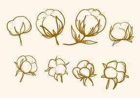 Vetor de flor de algodão desenhado à mão livre