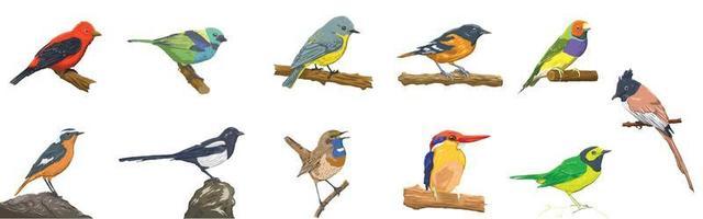 conjunto colorido de pássaros realistas vetor