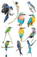 conjunto colorido de pássaros realistas