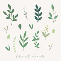 elementos de decoração botânica. vetor
