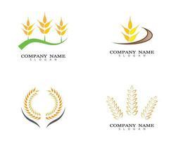 conjunto de design de logotipo de trigo vetor