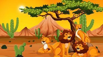 família de leões no deserto vetor