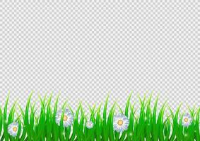 fundo isolado primavera com flores de camomila vetor