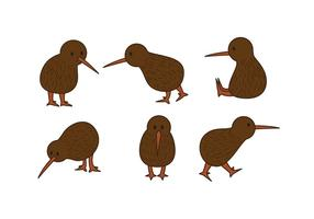 Conjunto de vetores de pássaro kiwi