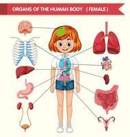 ilustração médica científica de órgãos do corpo humano vetor