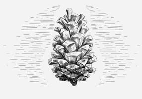 Ilustração de cone de pinho livre do vetor
