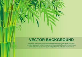 Bamboo fundo Vector