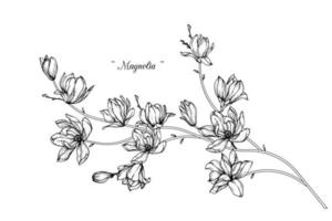desenhos de flores de magnólia vetor