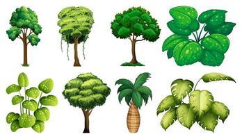 conjunto de plantas e árvores
