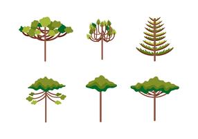 Araucaria Ilustração vetor