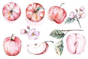 conjunto de maçã vermelha desenhada à mão em aquarela