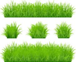 conjunto de bordas de grama verde vetor