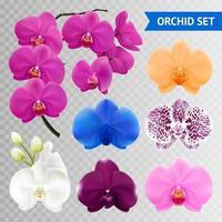 conjunto transparente de orquídea