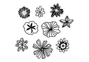 Conjunto de flores preto e branco vetor